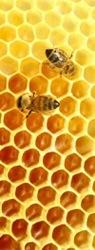 Продаю Алтайский мед